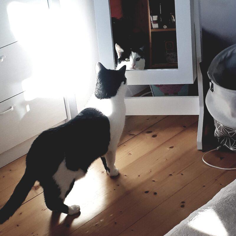 Vítr-Voda_firemní kočka